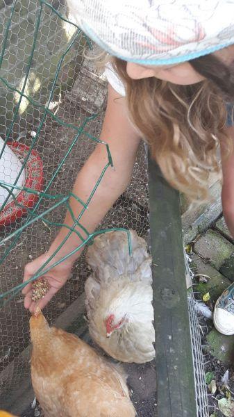Kippenfarm Een Begrip In Veenendaal En Omstreken Mail Voor Meer